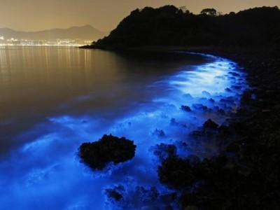 Bioluminiscencija, živa bića koja sijaju