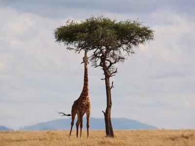 Da li znate zašto je od svih kontinenata najteže nahraniti afričko stanovništvo?
