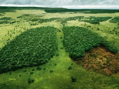 Pluća Zemlje