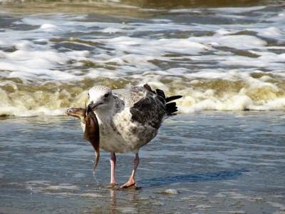 Šta mislite, može li voda u jezeru da sadrži veći procenat soli od morske?