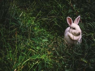 Da li je ovaj zakon za zaštitu životinja najčudniji na svetu?