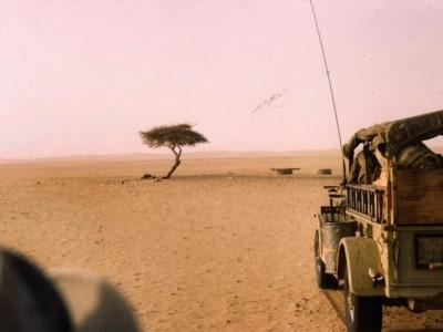Znate li koje je najusamljenije drvo naše planete?