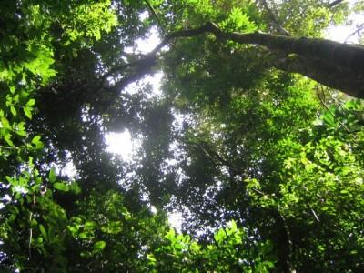 Znate li koliko je vremena potrebno kišnim kapima da se probiju kroz prašumu do tla?