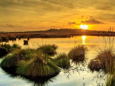 Pantanal, divljina Južne Amerike