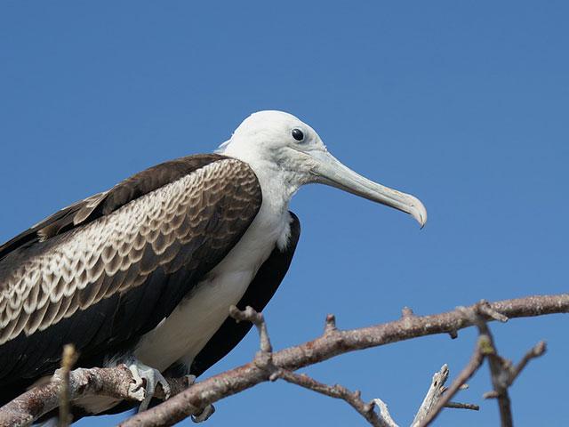 Galapagos, arhipelag čiji je jedinstveni živi svet inspirisao Čarlsa Darvina