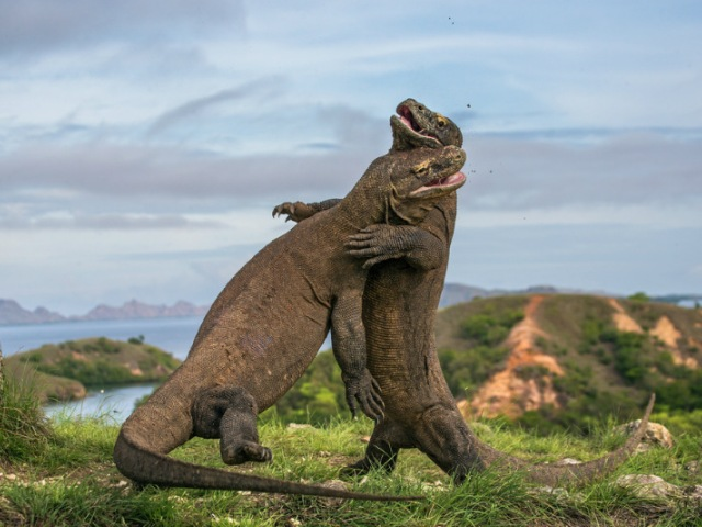 Komodo ostrva, dom zmajeva