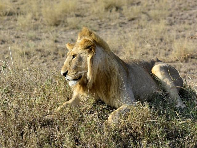 Nacionalni rezervat Amboseli, najlepše od Afrike