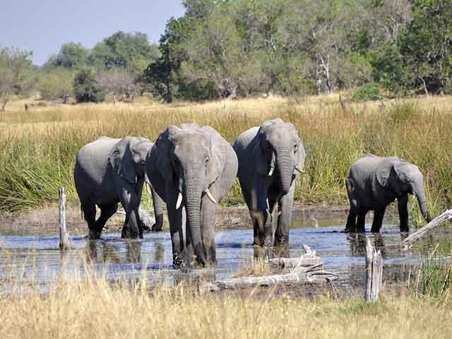 Okavango,poplave koje život znače