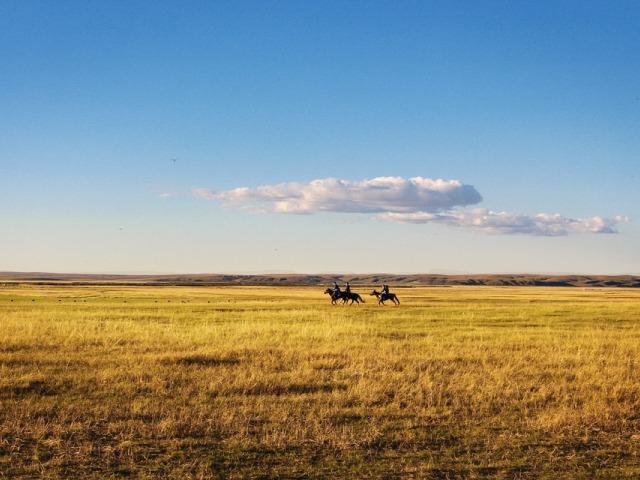 Prirodne travnate oblasti, najdominantnija biljna formacija na kopnu