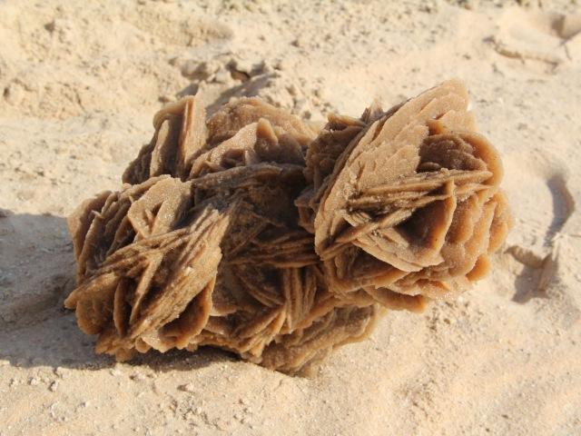 Pustinjska ruža, najlepši cvet pustinje