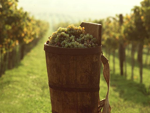 Tokajsko vinogorje, vinogradarski raj Mađarske