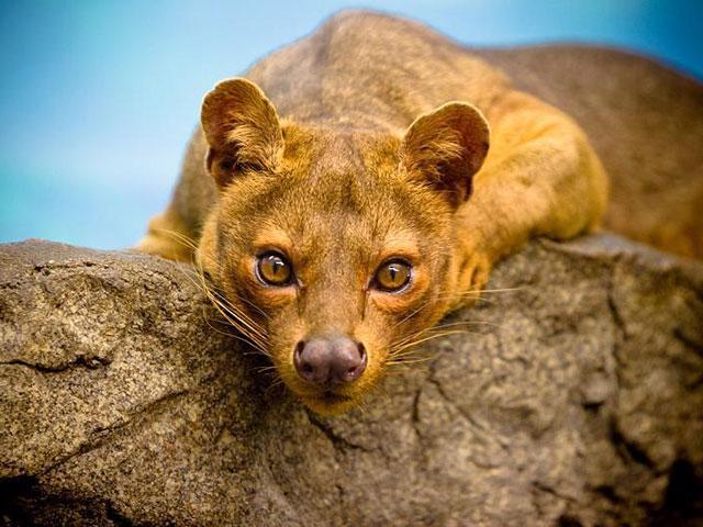 Totalno drugačiji od drugih, životinjski svet Madagaskara