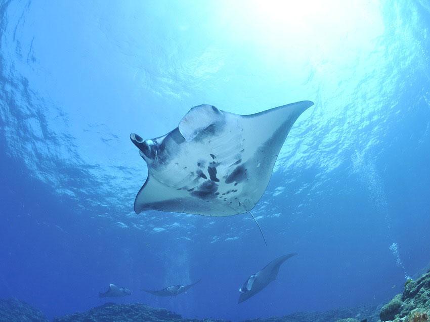 Da li znate kako je turizam direktno spasao jednu životinjsku vrstu od izumiranja?