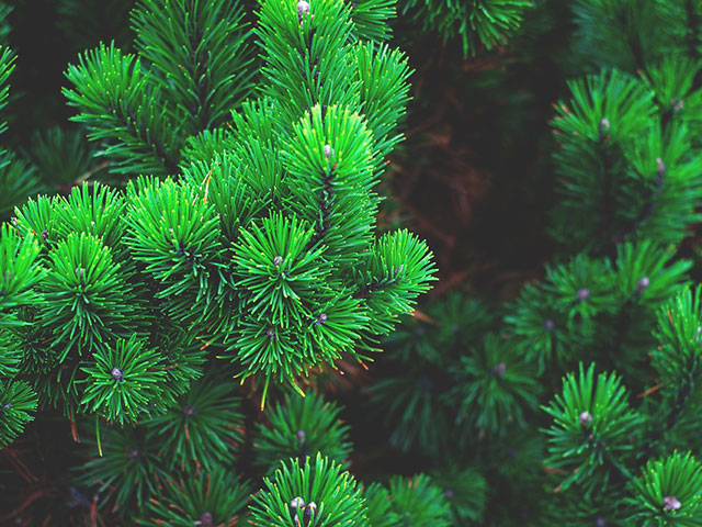 Da li znate kako se u Indiji bore za očuvanje svetskih šuma?