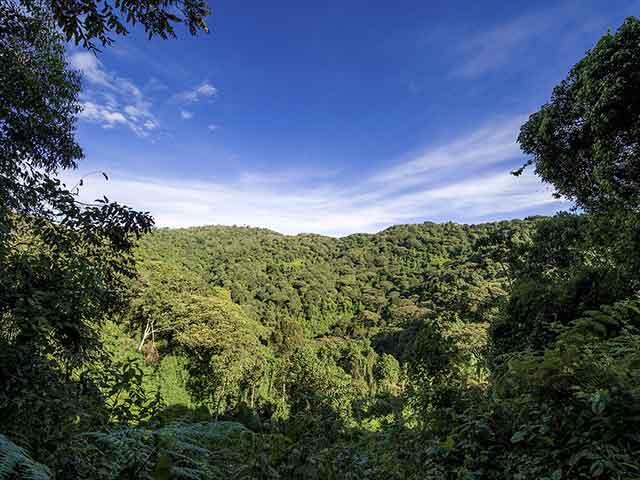 Znate li da najvažnije biljke za ishranu ljudu na planeti potiču iz prašuma?