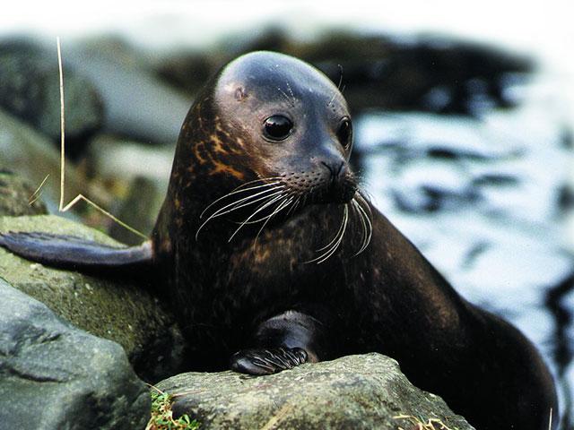 Oni hrabro odolevaju surovoj hladnoći, flora i fauna Antarktika