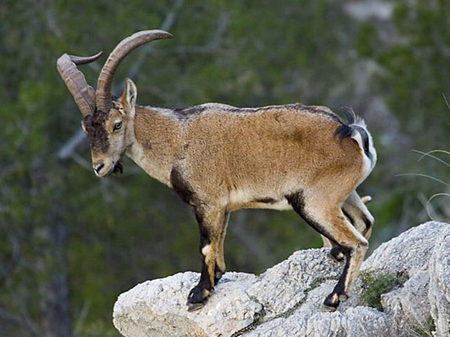 Pogledajte galeriju slika Nacionalnog parka Ordesa, najlepšeg dela planinskog venca Pirineji