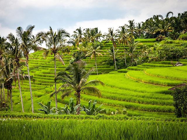 Poljoprivredne oblasti sveta