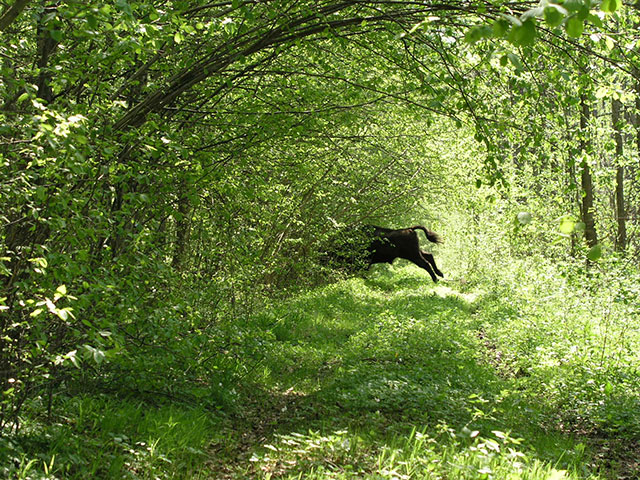 Upoznajte prastaru šumu u srcu Evrope kojom vladaju bizoni