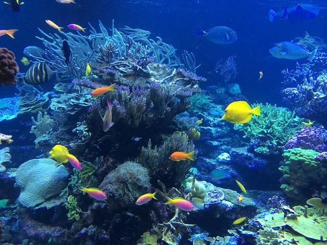 Veliki koralni greben Australije