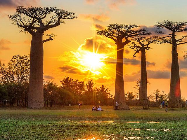 Veliko crveno ostrvo  Madagaskar, drugačije i potpuno jedinstveno