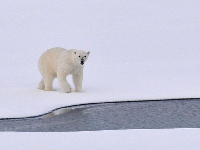 Da li ste znali ove činjenice o globalnom zagrevanju?