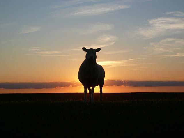 Zemlja ovaca