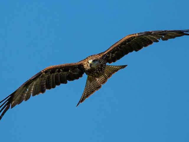 Iznenadiće vas kada čujete u kojoj zemlji živi najviše ptica!
