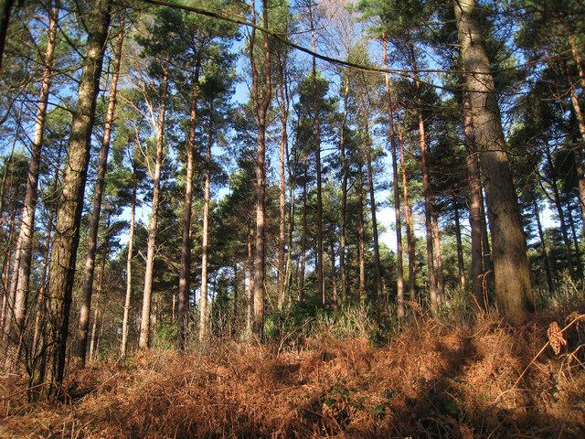 Da li znate kako nam drveće pomaže da upoznamo klimatske karakteristike Zemljine prošlosti?